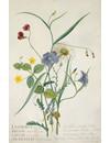 Weidebloemen 10 Notecard Pack