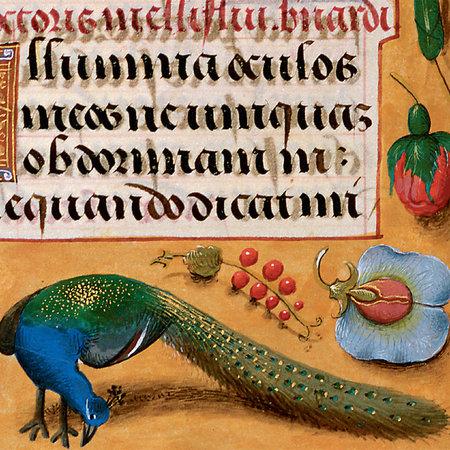 Fitzwilliam Museum Pauw op Floral Boarder Getijdenboek 1490 Card