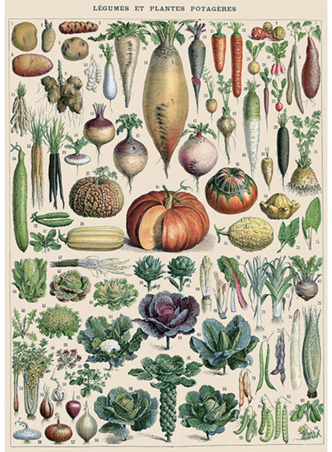 The Glory of Vegetables   Card