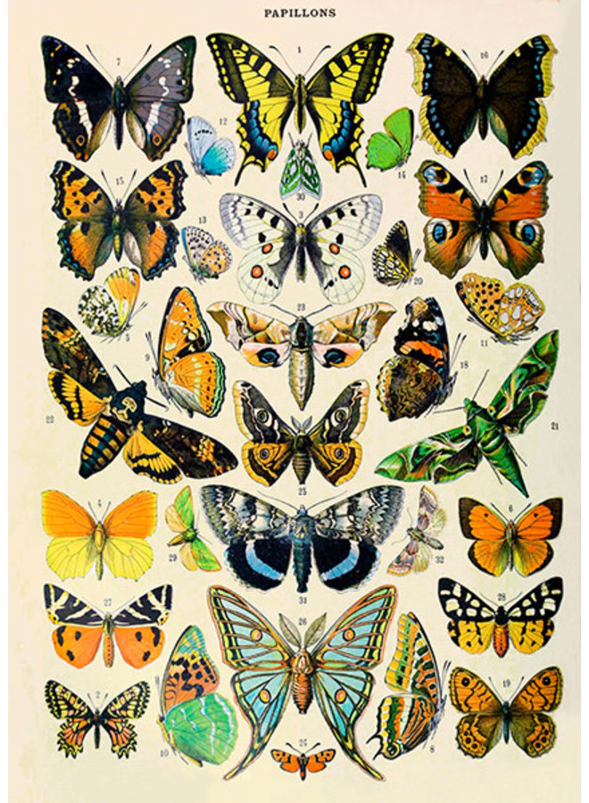 Natural History, Butterflies  Card