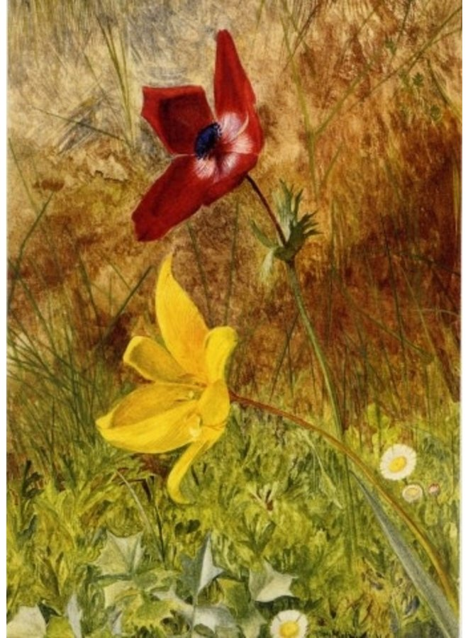 Wild Anenome & Tulips by Henry R Newman 140x 180mm card
