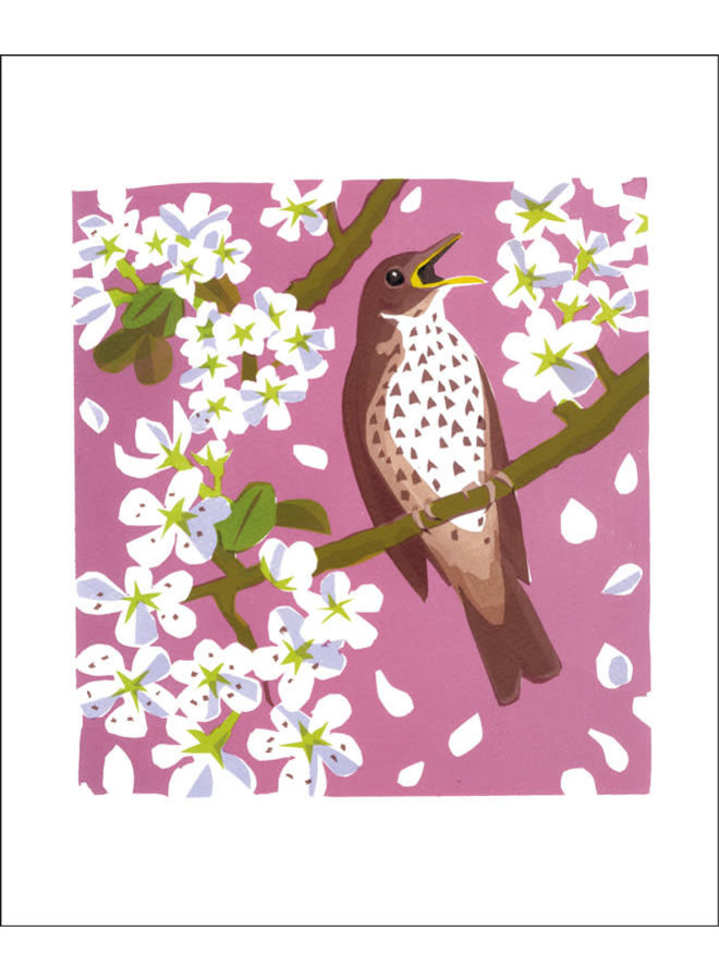 Song Thrush by Carry Akroyd