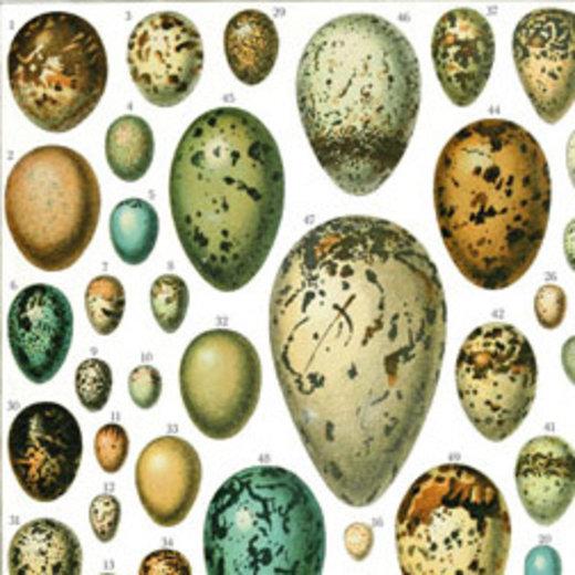 Eier und Hühner