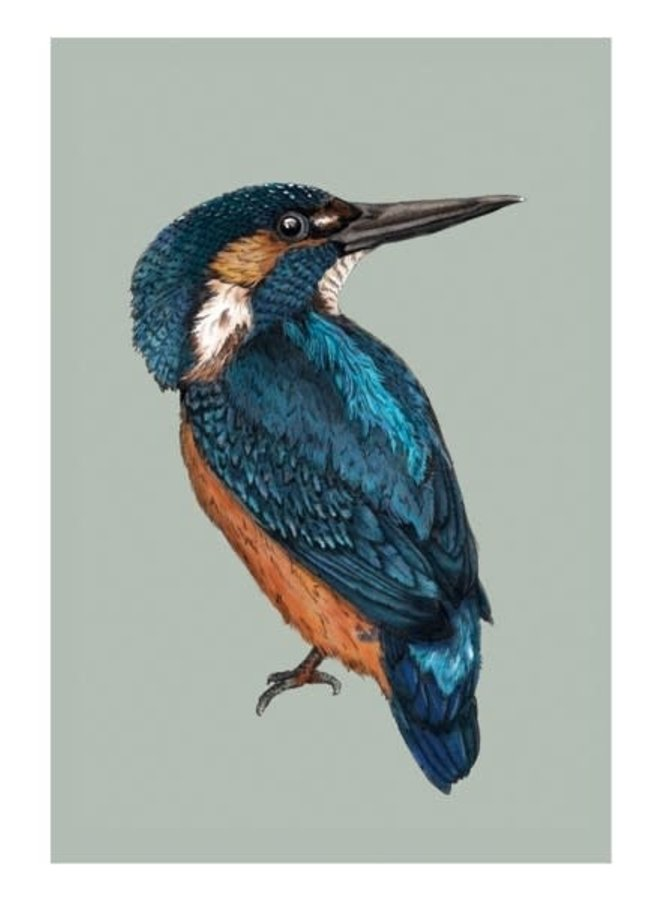 Kingfisher  Natural History Card by Ben Rothery