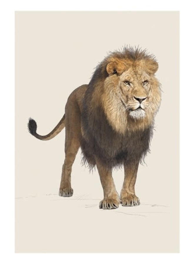 Lion Natural History Card von Ben Rothery