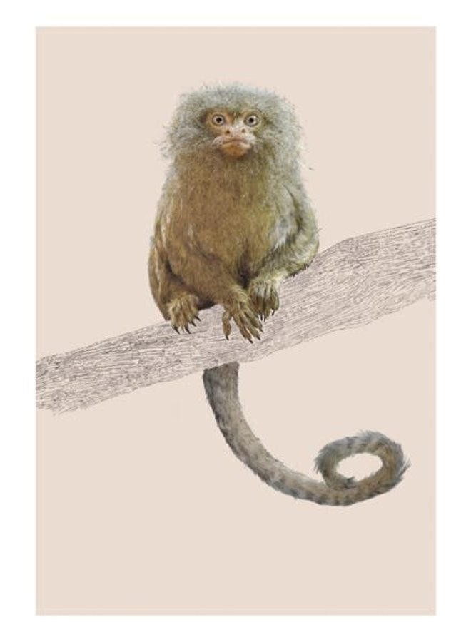 Pigmy Marmoset Natural History Card von Ben Rothery