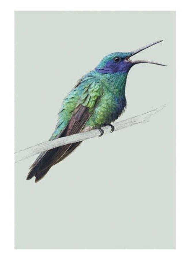 Vogel Violetear Naturkundekarte von Ben Rothery