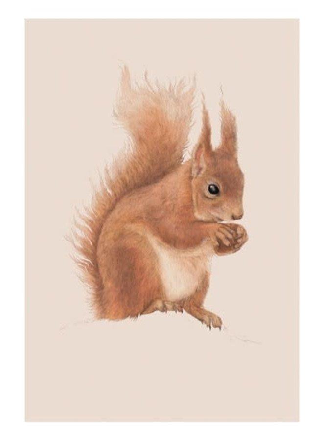 Eichhörnchen-Naturgeschichte-Karte von Ben Rothery