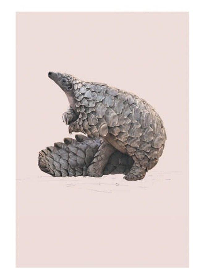 Pangolin Natural History Card von Ben Rothery
