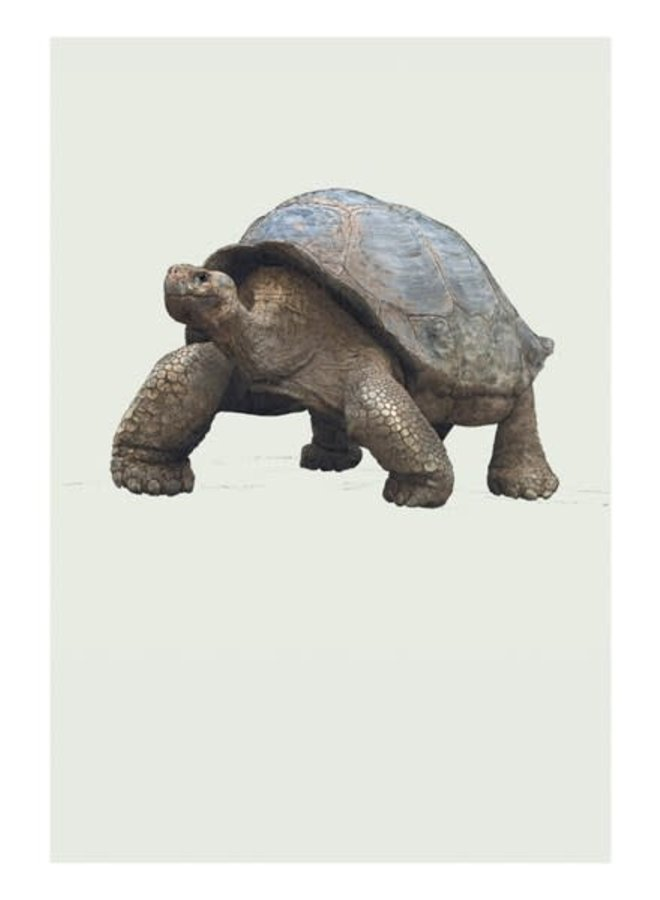 Galapagos Giant Rortoise Natural History Card von Ben Rothery
