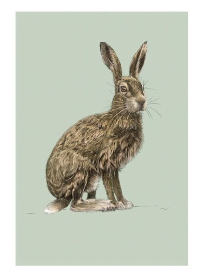 Hase Natural History Card von Ben Rothery
