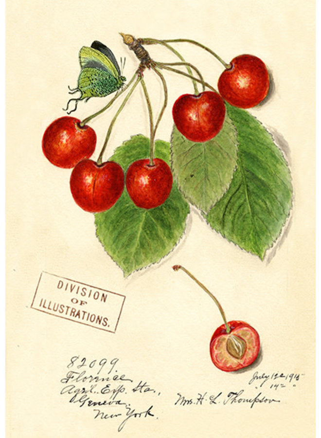 Cherry Vintage Card
