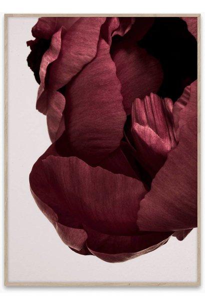 Peonia 02 - 50x70 cm