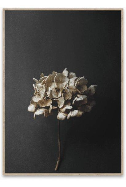 Still life 04 - 50x70 cm