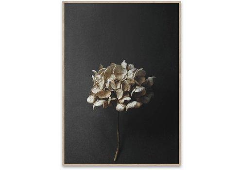 Paper Collective Still life 04 - 50x70 cm