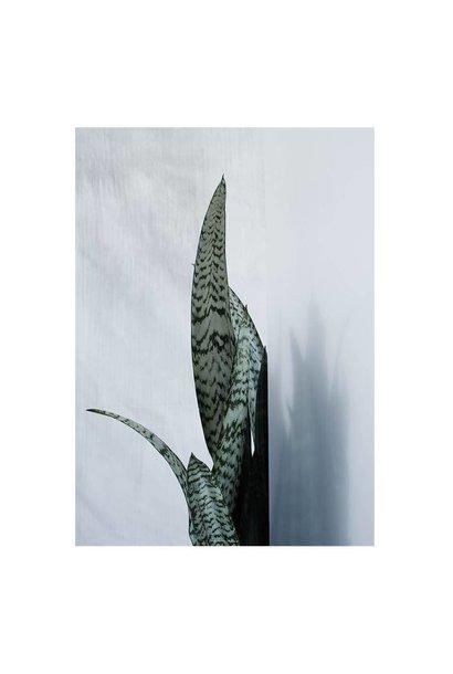 Botanic postcard - bayonet plant I