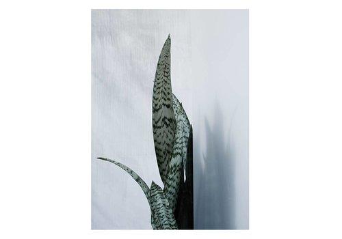 Kristina Dam Studio Botanic postcard - bayonet plant I