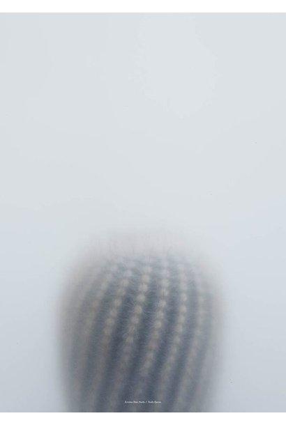 Botanic postcard - ball cactus I