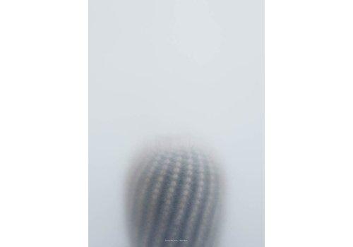 Kristina Dam Studio Botanic postcard - ball cactus I