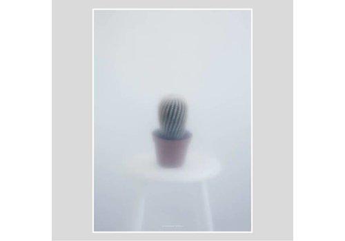Kristina Dam Studio Botanic postcard - ball cactus  II