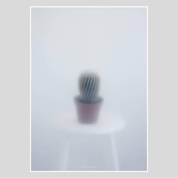 Botanic postcard - ball cactus II-1