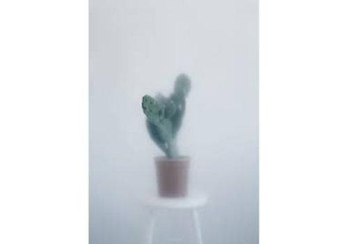 Kristina Dam Studio Botanic postcard - cactus I