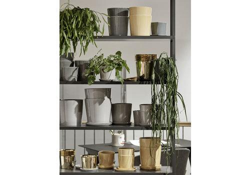HAY Botanical Family - POT medium