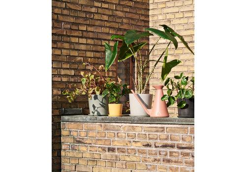 HAY Botanical Family - POT large