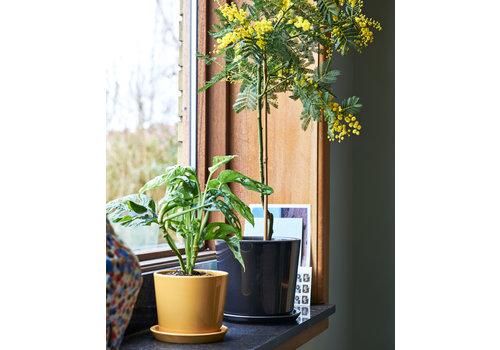HAY Botanical Family - POT extra large