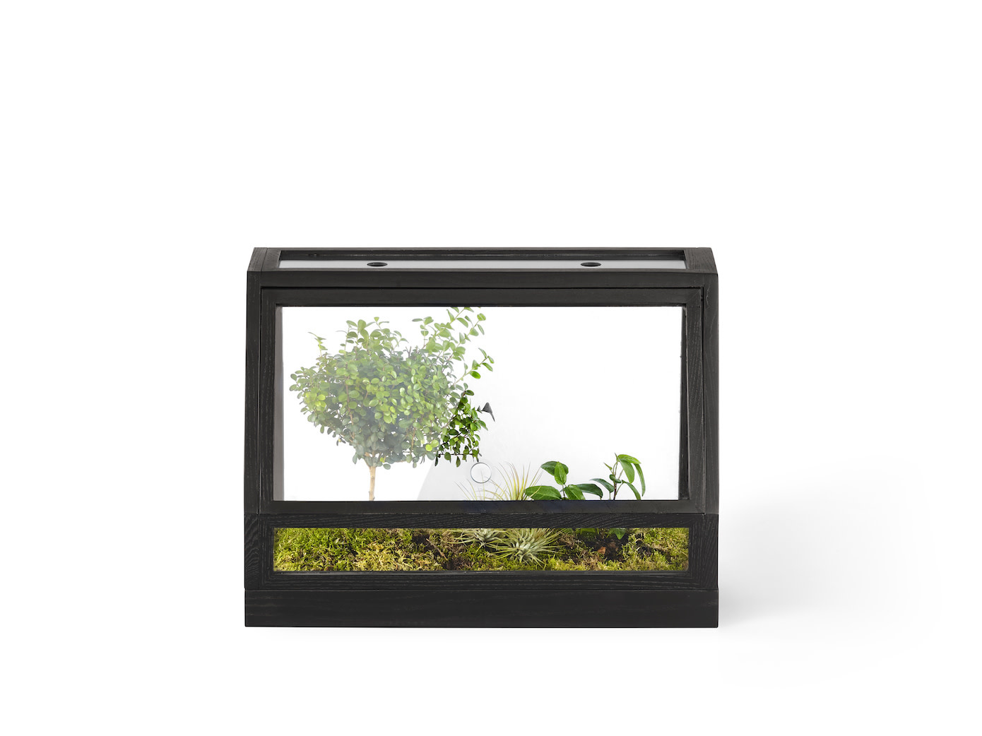 Mini Greenhouse-5