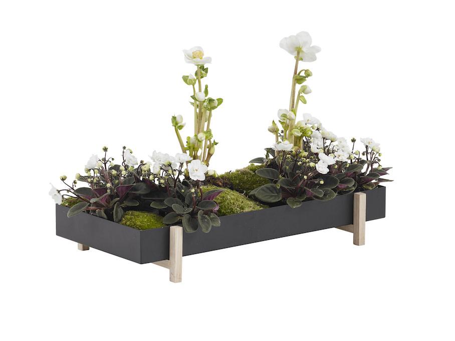 Botanic Tray-1