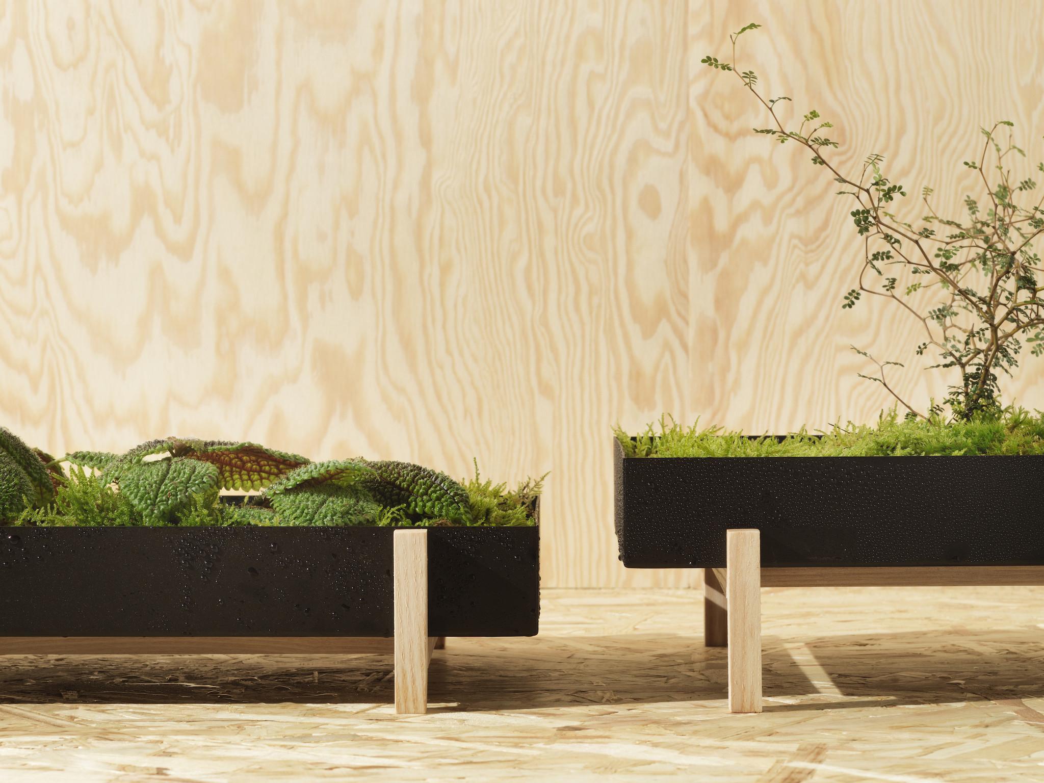 Botanic Tray-2
