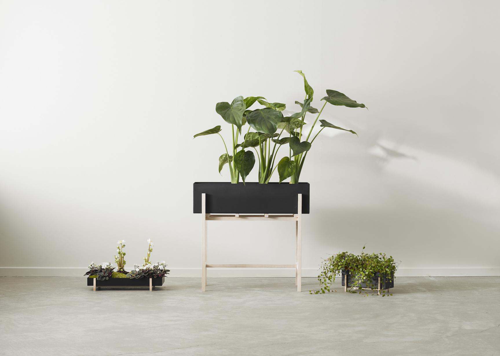 Botanic Tray-3