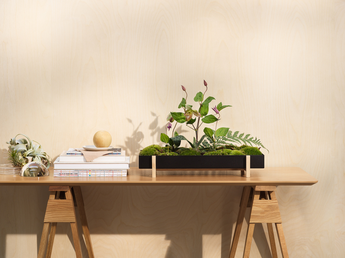 Botanic Tray-4