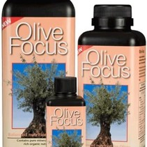 Olive Focus