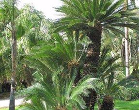 Mediterrane Bäume