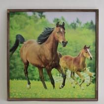 Buiten canvas paard in frame 58x58cm