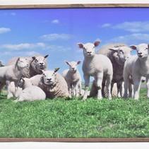 Buiten canvas schaap in frame 58x78cm