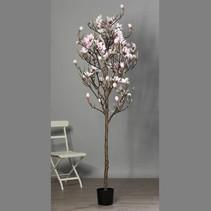 Magnolia boom in pot 230cm rose-creme