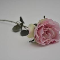 Roos poeder roze 45cm
