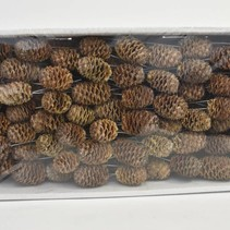 Sabulosum 10cm wire box Natural (100pcs)