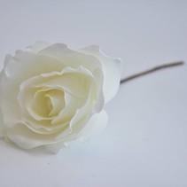 Open Rose cream medium