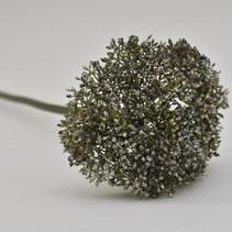 Allium Rochelle blue 68cm