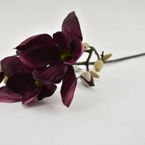 Magnolia Lisa purple 65cm