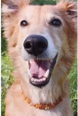 Barnsteen hondenketting middel