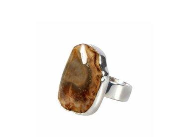 Versteend hout ringen