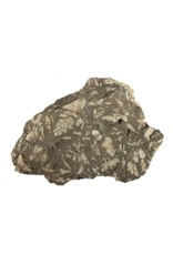 Chrysant steen ruw