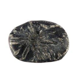 Chrysant steen plat gepolijst