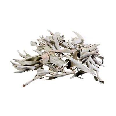 Losse witte salie (25 gram)