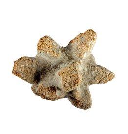 Glendoniet cluster 175 - 250 gram